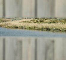 Waterlands by Gwenda  Harvey