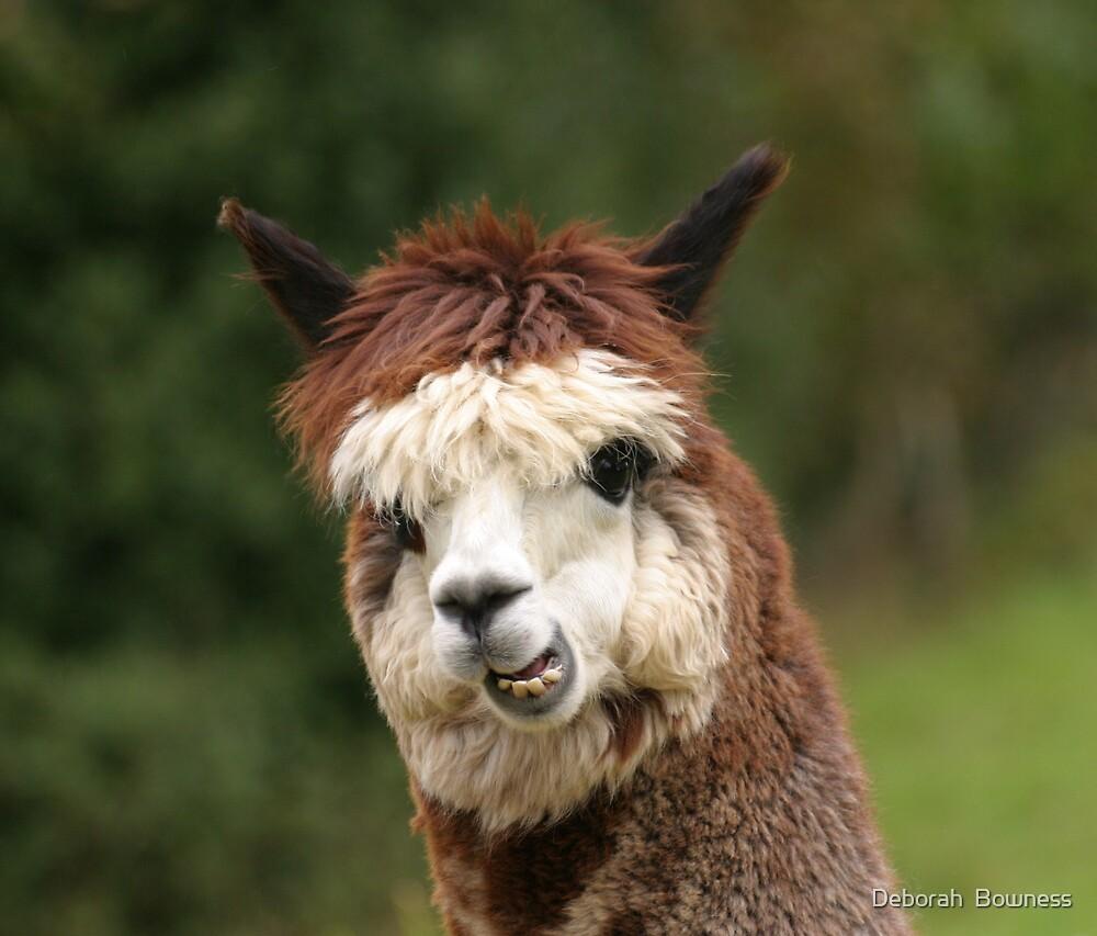 Smile! by Deborah  Bowness