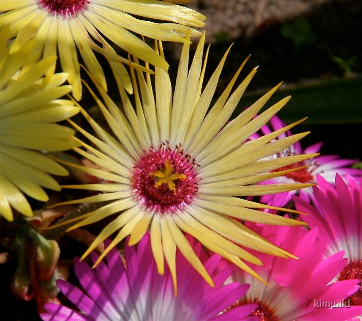 Flower Illuminate by kimwild