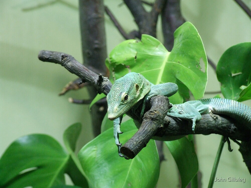 Lazy Lizard by John Gilluley