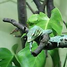 Lazy Lizard by John Gilluley