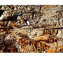 Tapestry in Bark Photographic Print