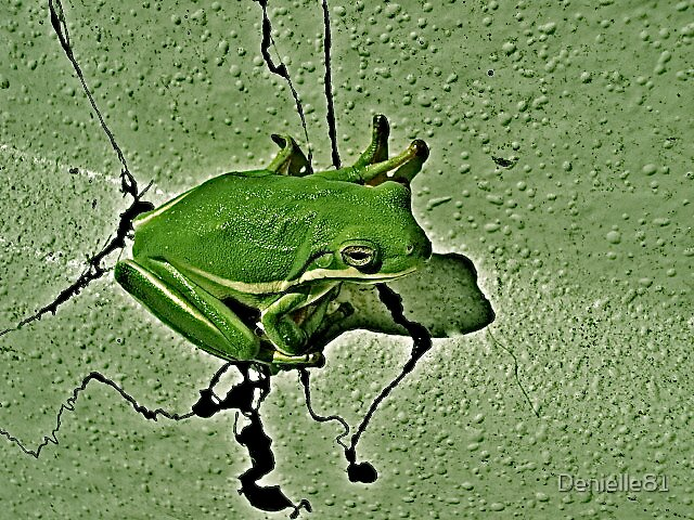 green green frog by Denielle81