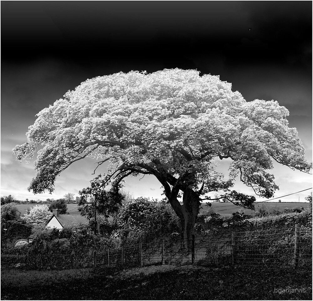 Blossom. by brianjarvis