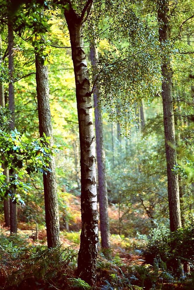 Leith Hill, Autumn by Stephen Jackson