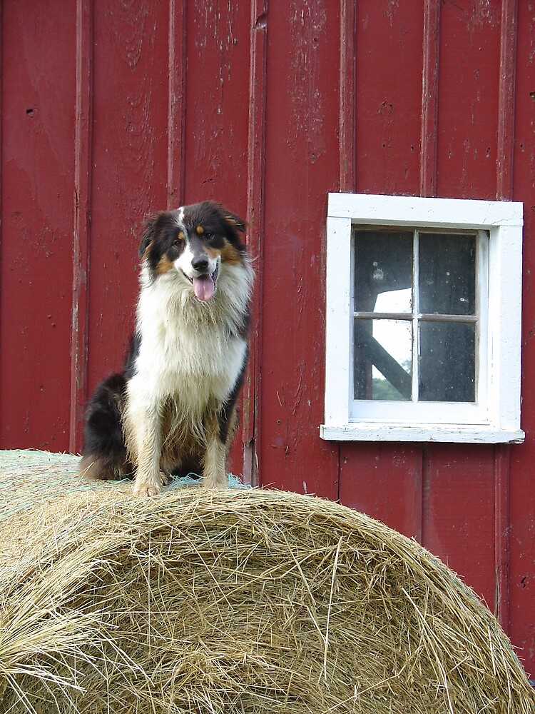 Farm Dog by Susy Rushing
