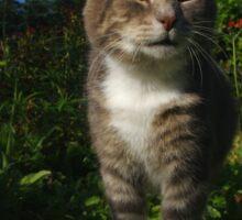 Tabby cat hunting in garden Sticker