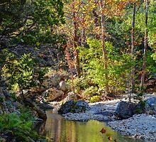 Small Pond at Lost Maples by Savannah Gibbs