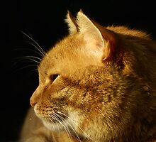 Cat Profile by kmlsphotos
