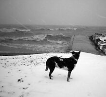 Waiting for the Storm to End (The Beaches, Toronto, Ontario, Canada December 2003) by Edward A. Lentz