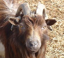 Billy Goat by Susy Rushing