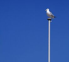 Seagull on a Mast by Steve Dowdeswell