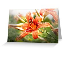 Wet Lily Greeting Card