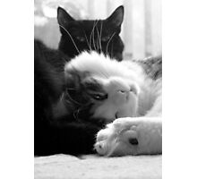 Nap Time Photographic Print