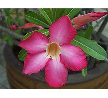 Oriental flower Photographic Print