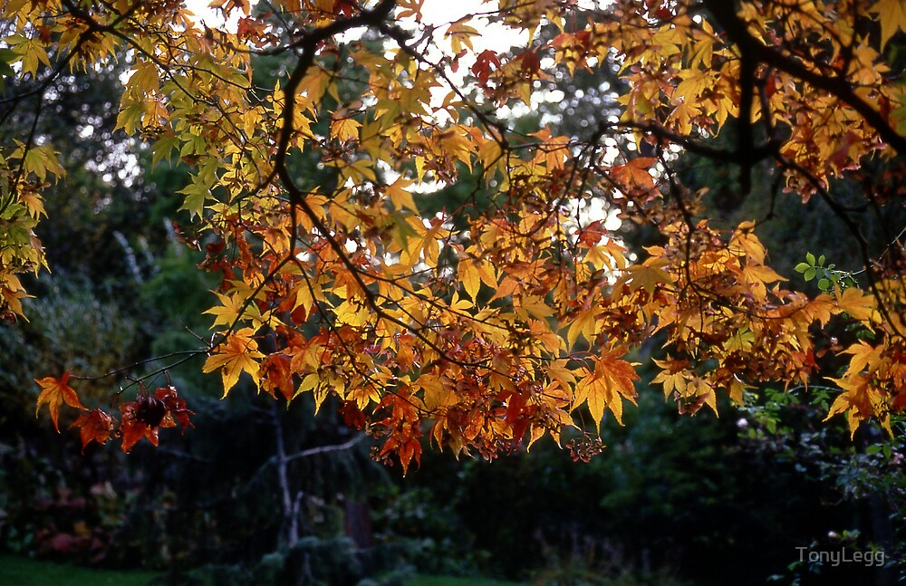 Autumn  by TonyLegg