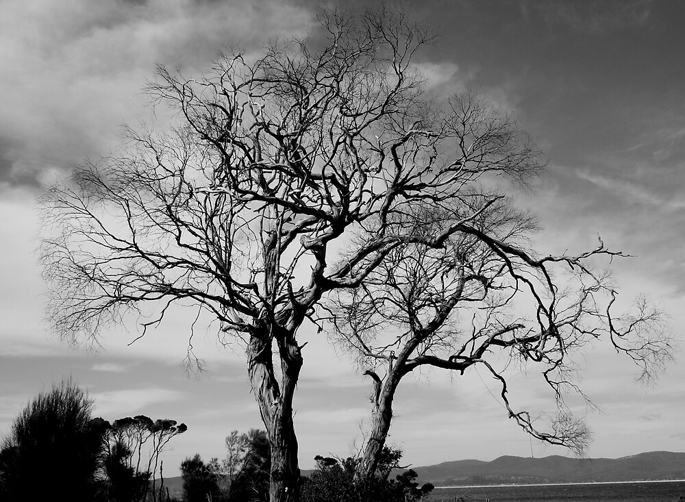 Leafless by image