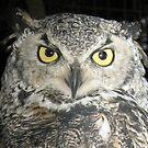 Owl be damned! by Darlene Ruhs