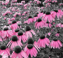 flower pink  by paula whatley