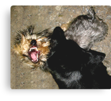 Fine, I Love You!!  Now Let Go of My Neck! Canvas Print
