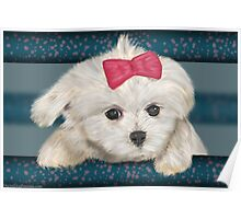 Cute Maltese Dog with Creme Fur and Red Ribbon Poster