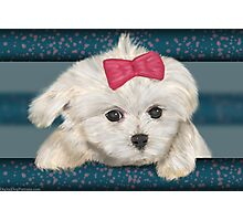 Cute Maltese Dog with Creme Fur and Red Ribbon Photographic Print
