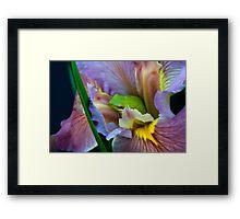 Frog n a bud Framed Print