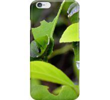 Curious Caterpillar iPhone Case/Skin