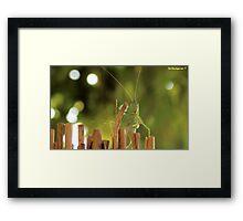 Flip Framed Print