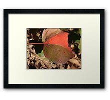 Patch Leaf Framed Print