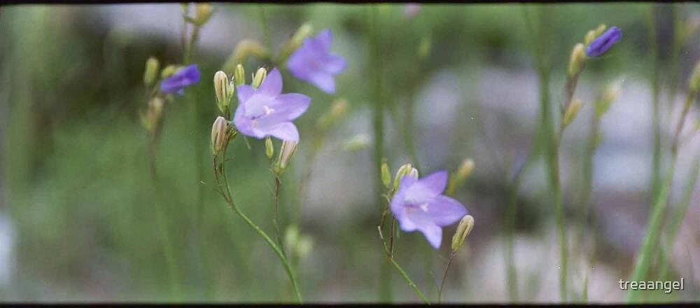 Lavender by treaangel