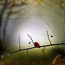Autumn Tune by Igor Zenin