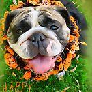 Halloween Greetings by brotbackgeraet