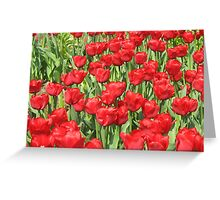 multitude of tulips Greeting Card
