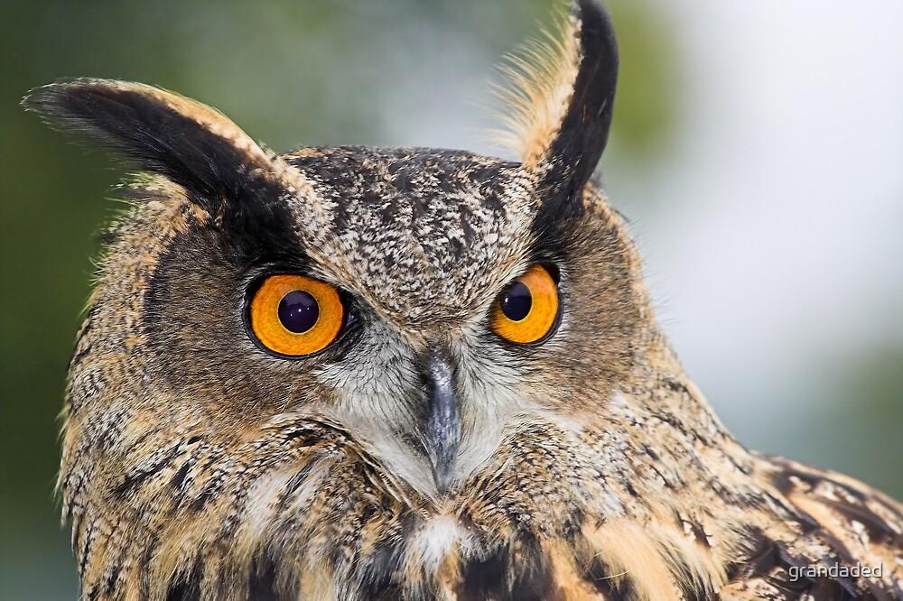 Eagle Owl by grandaded