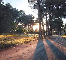 Forest sunset by BenSeffaj