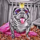 Wilmi Blythe Doll Dog Freak by brotbackgeraet