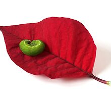 Green Caterpillar on a Poinsettia Leaf by grandaded
