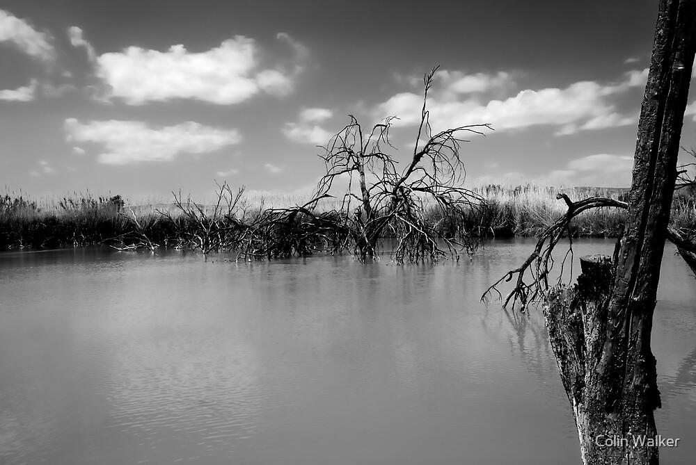 Desert Pond by Colin Walker