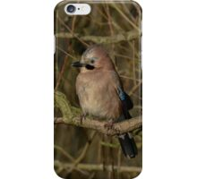 Eurasian Jay iPhone Case/Skin