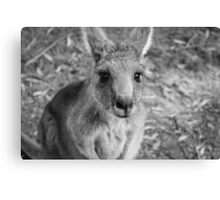Those Eyes - Halls Gap (BW) Canvas Print