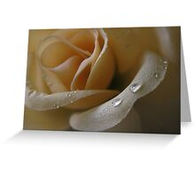 Cloth Rose Greeting Card