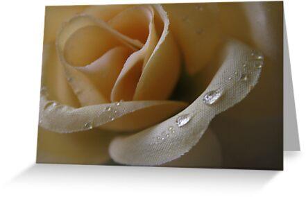 Cloth Rose by Crokuslabel