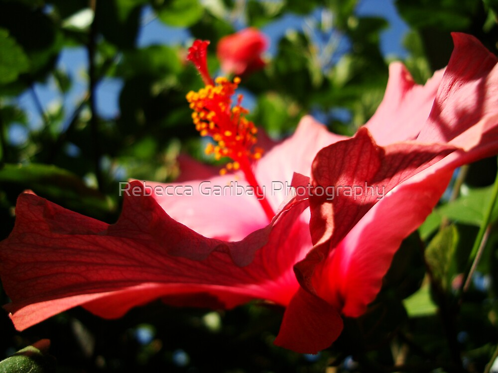 Beautiful by Rebecca Garibay Photography