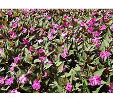 Full of Purple Flowers Photographic Print