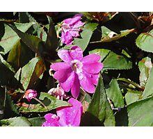 Purple Flower Focus Photographic Print