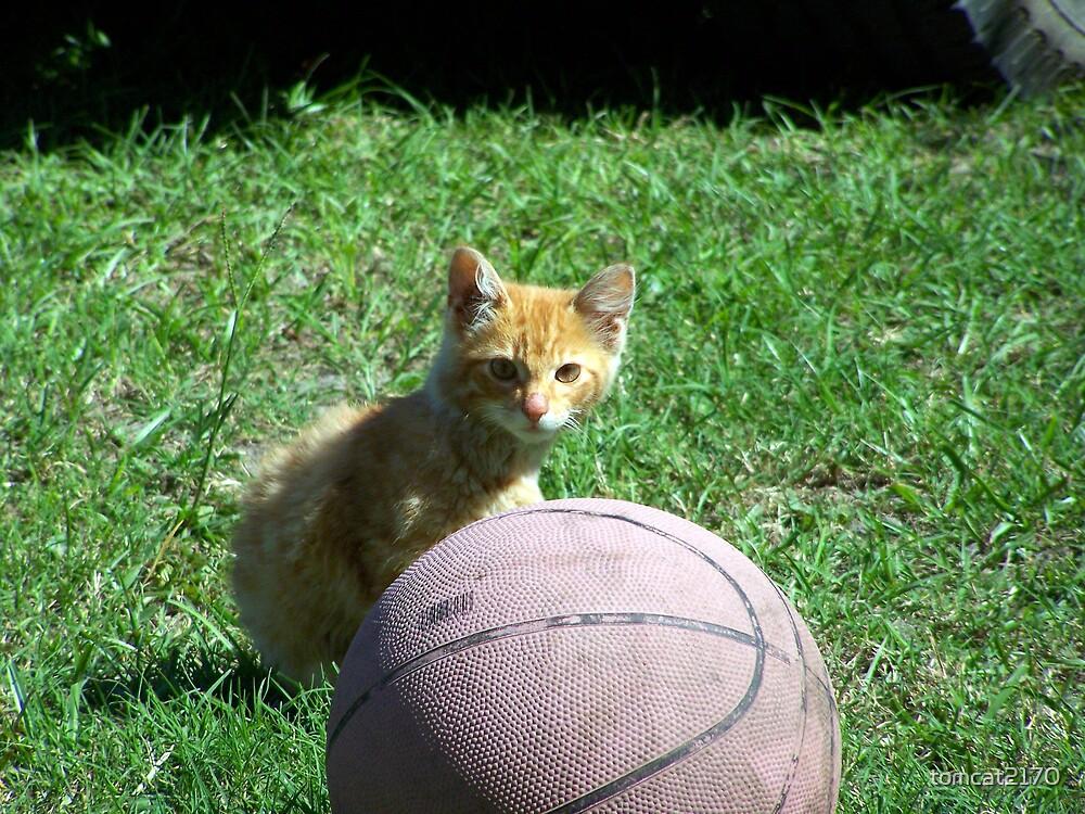 basketball anyone?? by tomcat2170