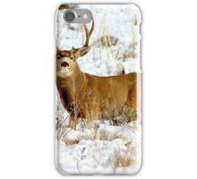 Colorado Mule Deer iPhone Case/Skin