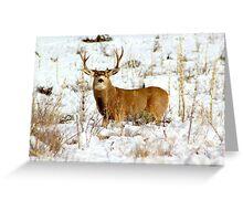 Colorado Mule Deer Greeting Card