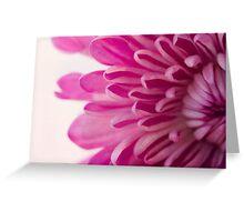Magenta Petals Macro Floral Photograph Greeting Card